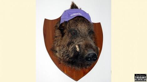trofeo di caccia Cinghiale Maremmano Fiorentina calcio